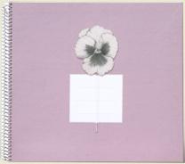 Album de fotos rosa