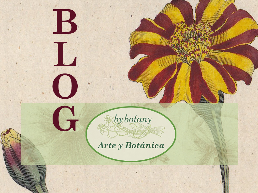 Blog de By Botany