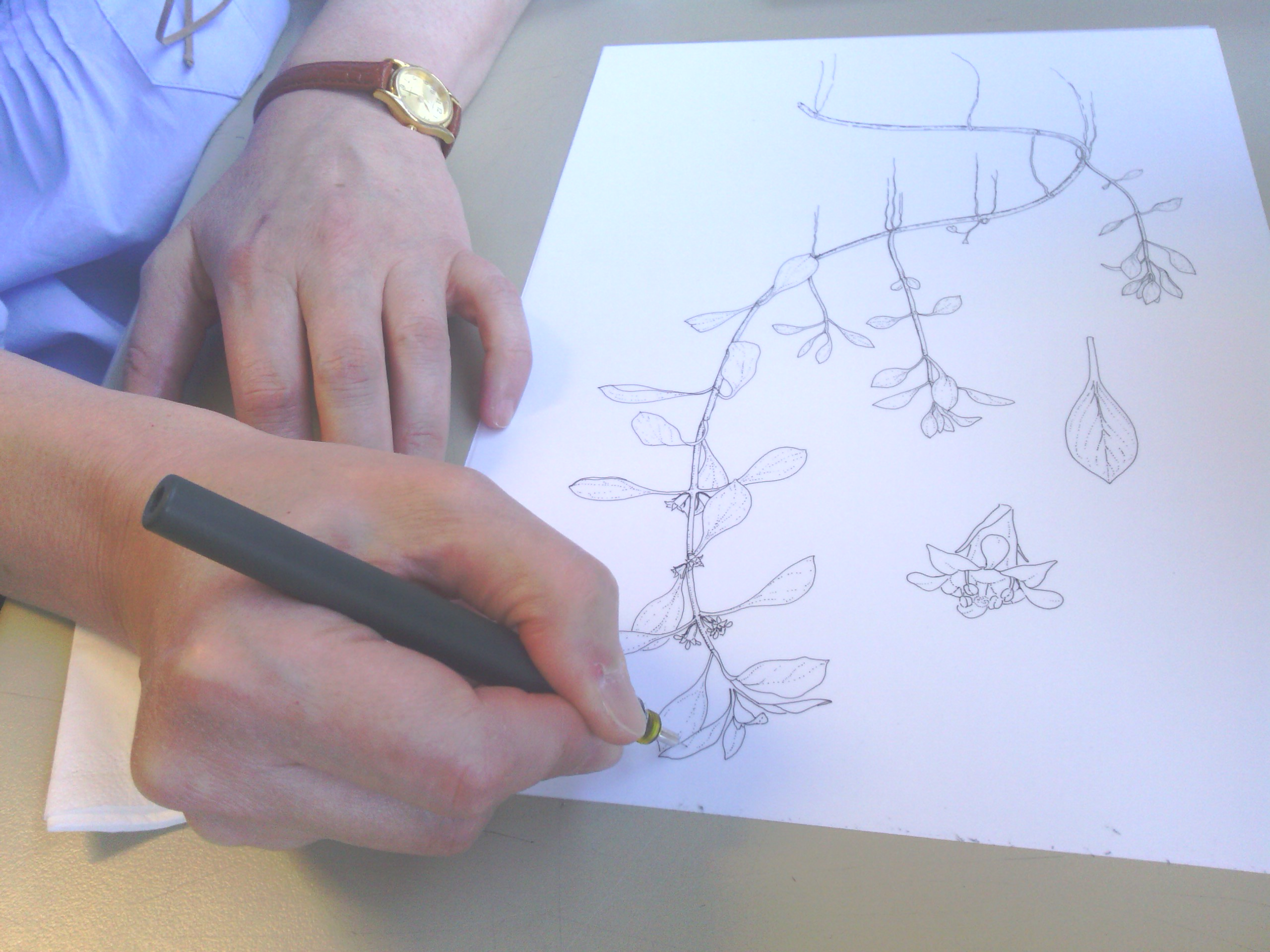 Marta Chirino dibujando en el Real Jardín Botánico, Madrid