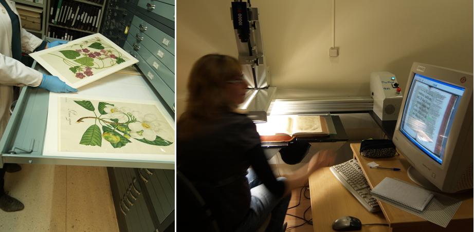 Archivo y Biblioteca del Real Jardín Botánico: depósito del archivo y digitalización de colecciones