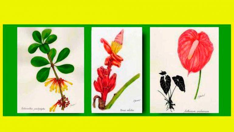 Exposición «La botánica ilustrada» Dibujos y pinturas de Consuelo García