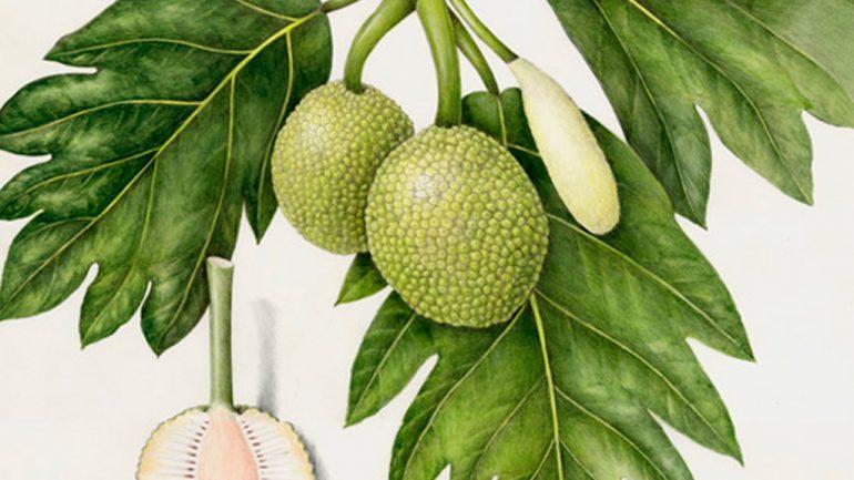 Curso de dibujo botánico con Wendy Hollender