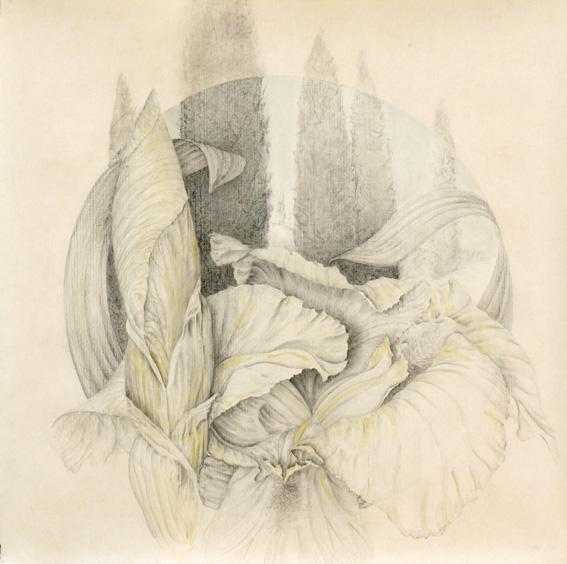 Marta Chirino, dibujo a lápiz sobre papel. Primavera en mi tierra.