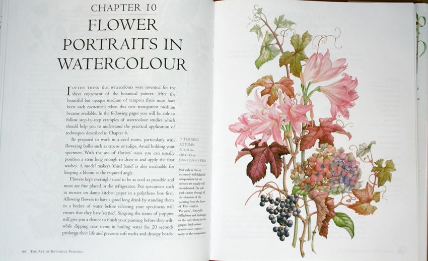 ilustracion botanica en acuarela