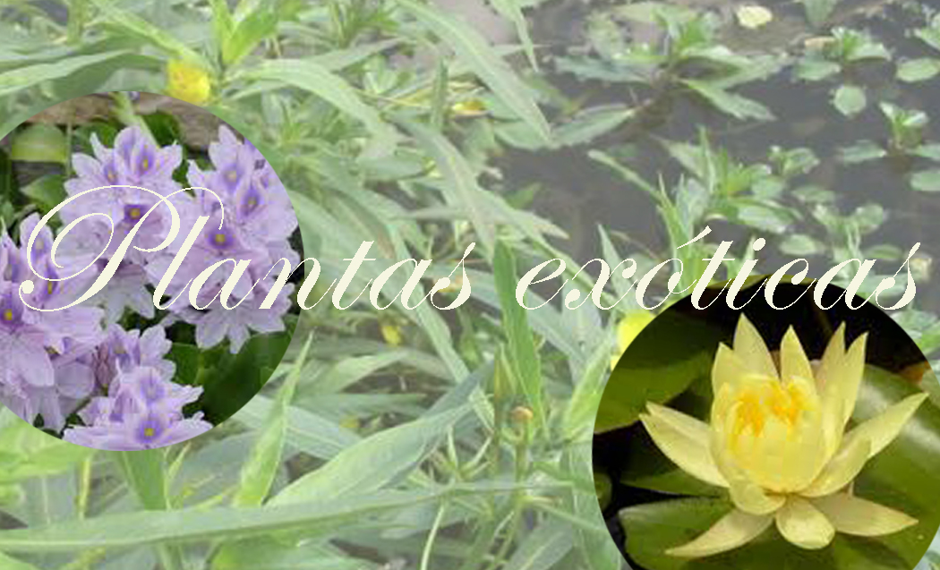 plantas ex ticas by botany