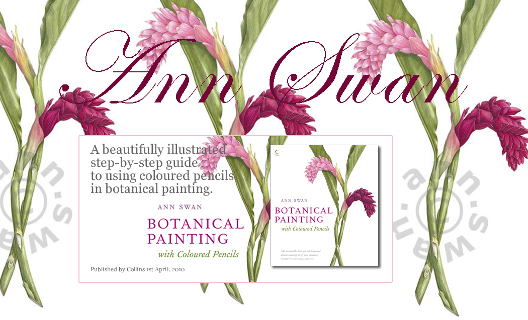 Ann Swan Botanical Artists