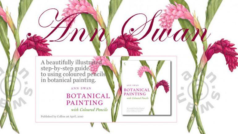 Ann Swan, SBA botanical artist