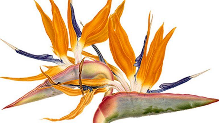 «Blooming Marvellous», Museo de Historia Natural en Tring