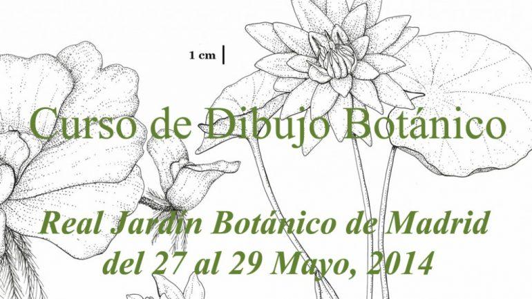 Curso de dibujo bot nico en el real jard n bot nico de for Jardin botanico cursos