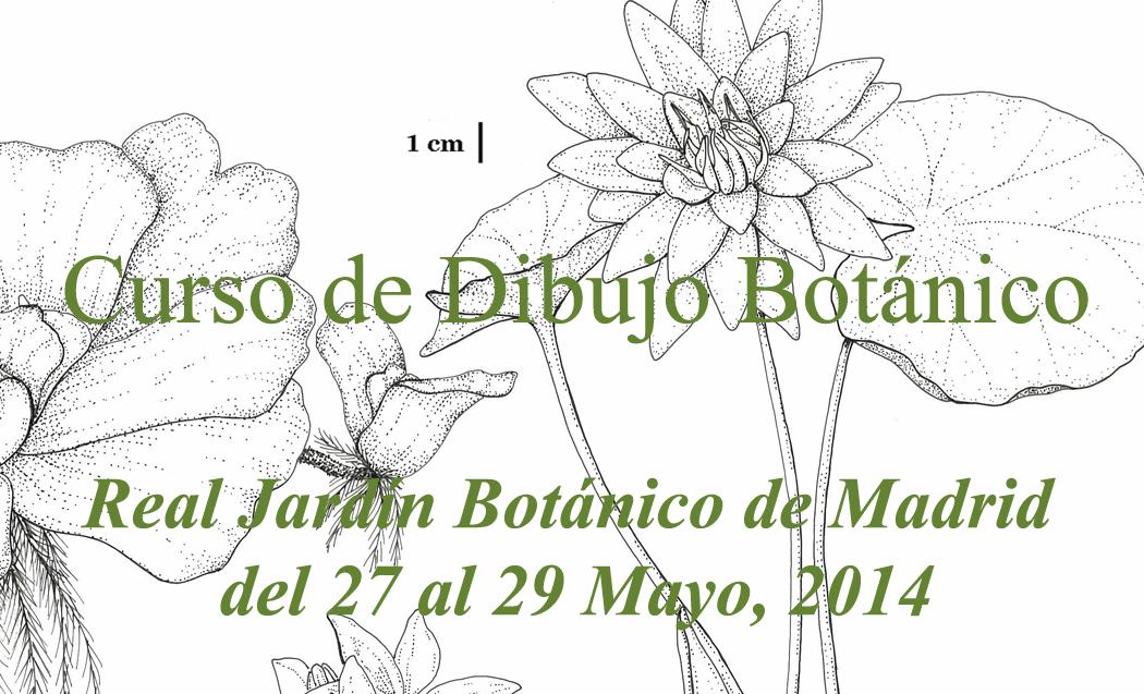 6º curso-dibujo-botanico-RJBM