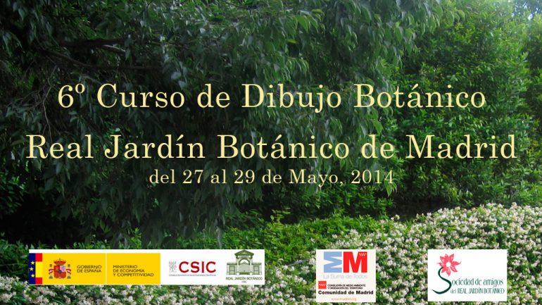 6 curso de dibujo bot nico en el real jard n bot nico de for Jardin botanico cursos