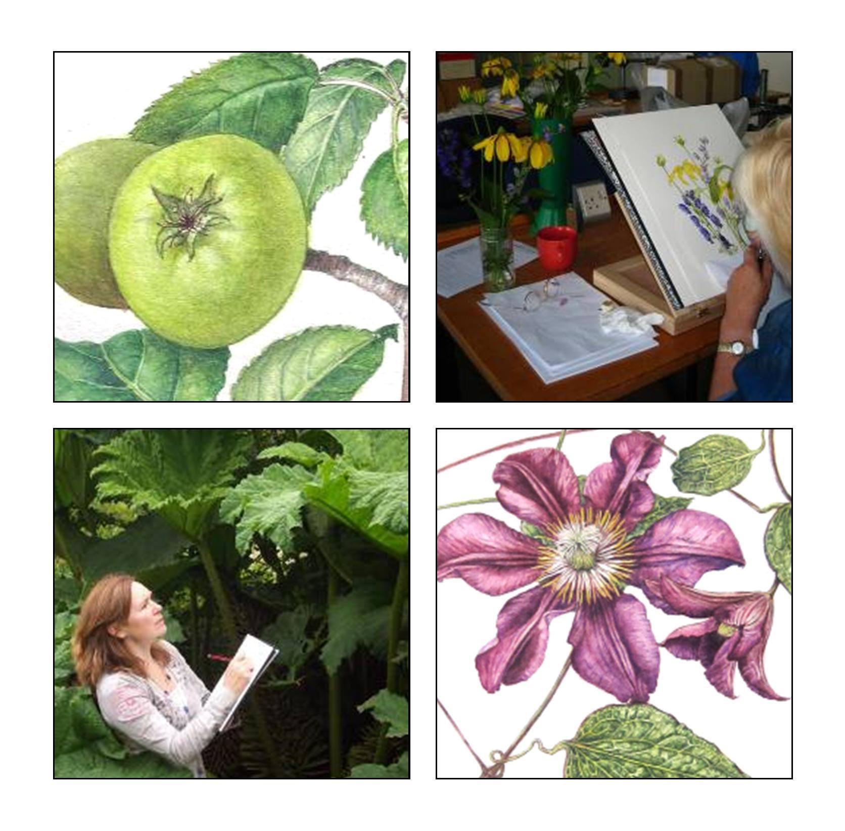 Curso corto de ilustración botánica en el RJBE