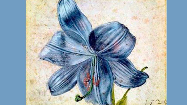 …un poco de historia sobre Ilustración Botánica