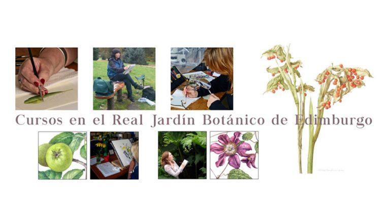 Cursos del rjbe de ilustraci n bot nica bybotany arte for Jardin botanico cursos