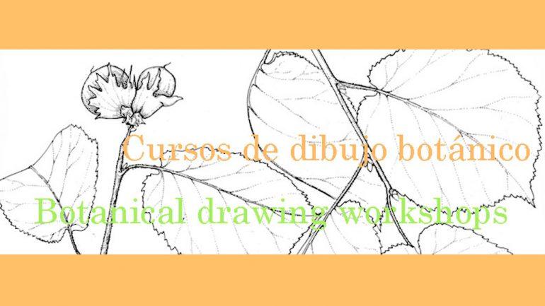 Cursos de Dibujo Botánico