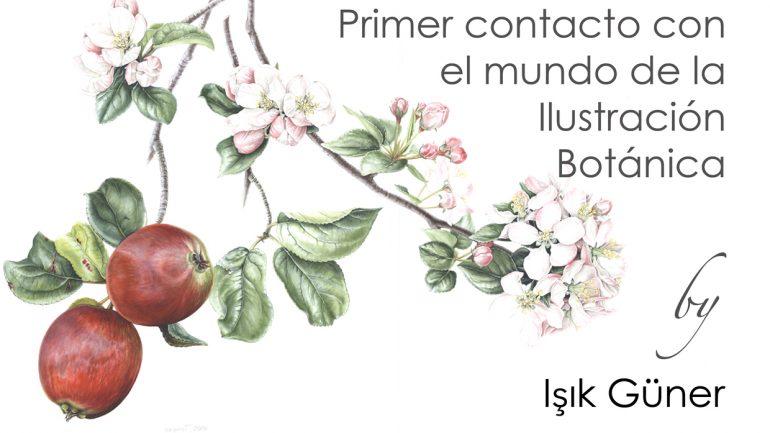Curso de pintura botánica con Işık Güner