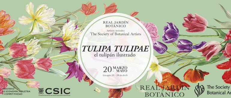 Exposición TULIPA, TULIPAE. El tulipán ilustrado