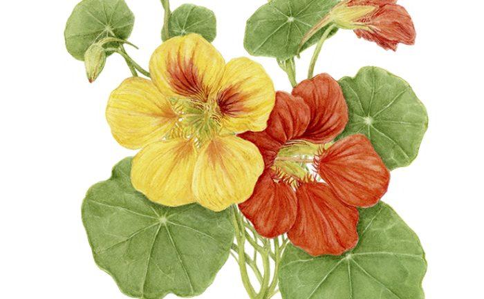 Curso intensivo de ilustración botánica con Xell Campos